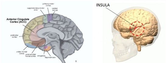 Brain Representations Of Social >> The Social Brain
